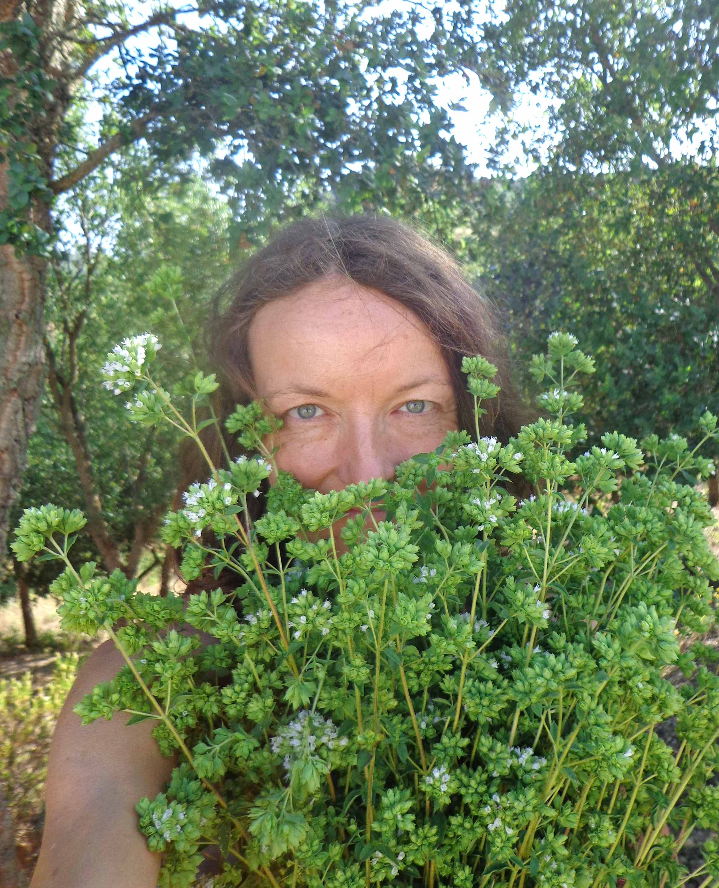 Ode to Wild Oregano … and other aromatic plants